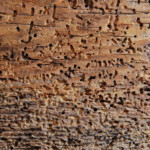 Как избавиться от древесных вредителей?