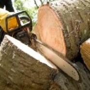 Как спилить дерево на арендованном участке