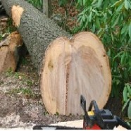 Как спилить дерево на охраняемых  землях?