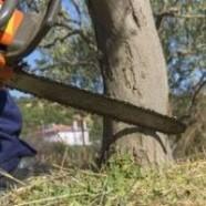 Как спилить дерево на своем участке