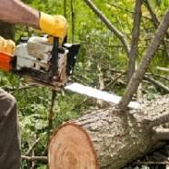 Как спилить дерево на общественной  земле?
