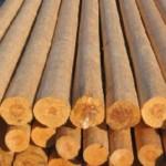 Строим сруб. Выбор древесины