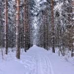 Строим сруб. Контроль качества древесины